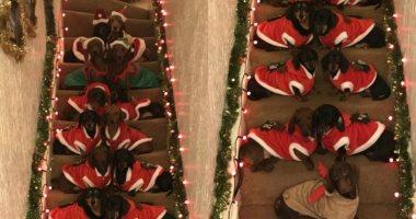 صورة مميزة تجمع 17 كلبًا فى ملابس بابا نويل.. اعرف قصتها