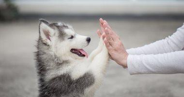 """""""لا تخافوا ولكن احذروا"""".. بيطريون يكشفون: 30% من مُربى الكلاب والقطط ألقوها فى الشارع بسبب """"كورونا"""".. أستاذ ميكروبيولوجى: الحيوانات قد تُصاب بالفيروس لكن لا تنقله للإنسان.. والتعامل بحذر هو الحل"""