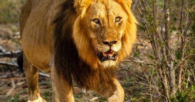 عالم الحيوان والحياة البرية.. تقنيات لتوثيق الحياة البرية برعاية جوجل