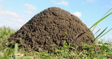العلماء يفسرون قدرة النمل العجيبة على المشي للخلف .. اعرف ليه