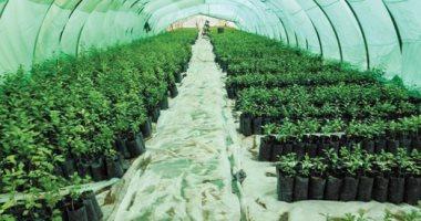 الزراعة: لجان دورية بمشاتل الخضروات للتأكد من مطابقتها المواصفات