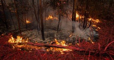 تعرف على أسباب حرائق غابات أستراليا وانتشارها بهذه السرعة؟