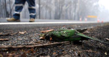 حرائق الغابات بأستراليا تدمر 20 مليون فدان ونفوق ملايين الطيور