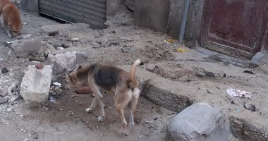 شكوى من انتشار الكلاب الضالة بالحى الأول فى مدينة العبور