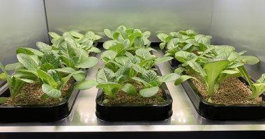 جهاز جديد يمكنك من زراعة 20 نوعا من الخضراوات داخل منزلك صور اليوم السابع