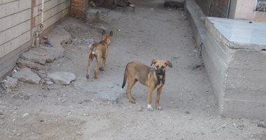 شكوى من انتشار الكلاب الضالة فى شوارع بيت العائلة فى مدينة 6 أكتوبر