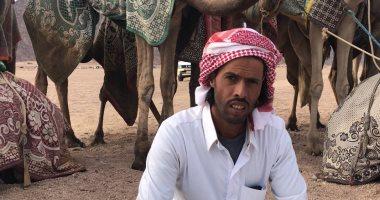 """""""أبو عليان"""" مدرب هجن يشارك بـ40 جملا فى منافسات مهرجان شرم الشيخ التراثى"""