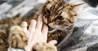 اكتشاف صادم.. القطط يمكنها تناول إنسان ميت