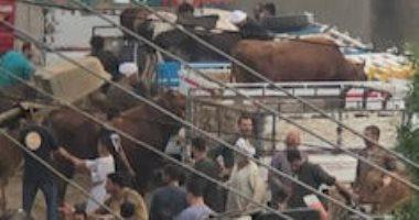 شكوى من سوق مواشى داخل قرية الأبعدية في مركز أوسيم بالجيزة.. صور