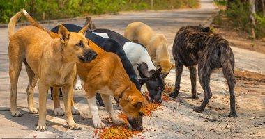 منطقة العقبة بالأردن تقرر صرف 10 دنانير لكل مواطن يصطياد كلب ضال دون قتله