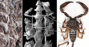 اكتشاف حفرية لعقرب من أوائل الكائنات على الأرض