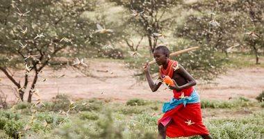 تغير المناخ يتسبب في غزو ملايين الجراد لإفريقيا