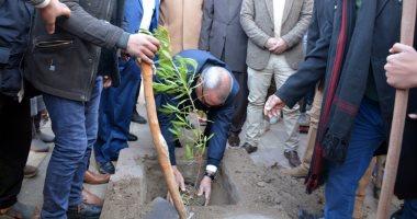 صور .. 100 شاب وفتاة يزرعون 400 شجرة مثمرة فى شوارع القليوبية