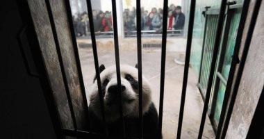 الصين تتبع إجراءات صارمة بشأن الحيوانات لاحتواء كورونا.. تعرف عليها؟