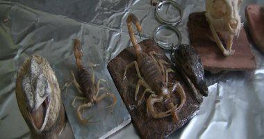 حفيد الفراعنة يحترف تحنيط الحيوانات من التماسيح إلى الحشرات.. فيديو
