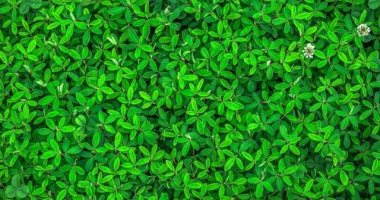 لماذا يزيد الاحتباس الحرارى على الرغم من زيادة إخضرار الكوكب؟