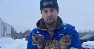 بعد إنقاذهم بفنجان قهوة .. تبني القطط الهاربة من التجمد في كندا