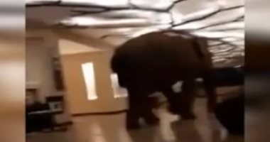 شاهد.. فيل يتجول بين غرف نوم فندق 5 نجوم فى سريلانكا -