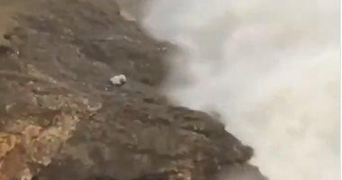 مجنون تصوير.. رجل يخاطر بحياته لالتقاط صورة أمام بحر هائج فى ويلز.. فيديو