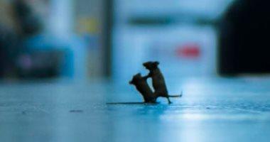 شاهد الصور الفائزة بجائزة مصور الحياة البرية.. أبرزها فأران فى محطة المترو