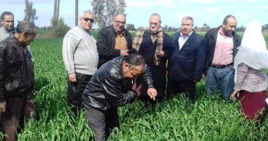 """""""زراعة الشرقية"""" تنظم ندوات للفلاحين لترشيد استخدم المياه فى زراعة القمح"""