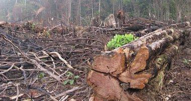 منظمة بيئية: ارتفاع نسبة إزالة الغابات فى الأمازون أثناء وباء كورونا بنسبة 80%