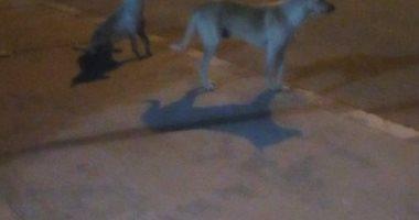 شكوى من انتشار الكلاب الضالة بمنطقة 6 أكتوبر بالجيزة
