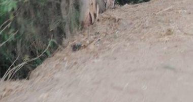 أهالى عزبة أبو سويلم بالشرقية يطالبون برصف طريق وصيانة أعمدة الإنارة