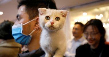 أستاذ فيروسات تعليقا على إصابة أول قطة بكورونا: الحيوانات لا تنقل العدوى للإنسان