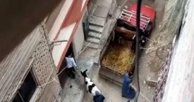 سكان شارع عطية بالمرج يناشدون نقل حظيرة لتربية المواشى خارج المنطقة