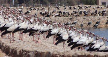 البيئة تعلن بدء موسم رصد وتسجيل الطيور المهاجرة برحلة عودتها إلى مواطنها