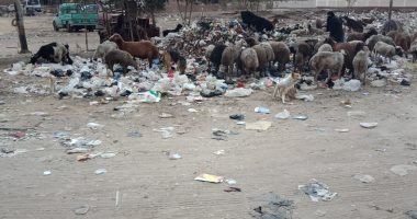 قارئ يشكو من انتشار القمامة بشارع العروبة فى الطالبية