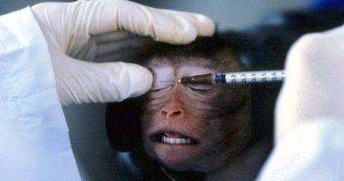 محاولة يائسة ..تجربة عقار ضد الفيروسات على القرود لإيجاد لقاح ضد كورونا