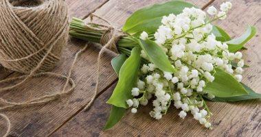 جميلة ولكن قاتلة.. أجمل الزهور السامة فى العالم.. إحداها تسببت فى موت سقراط