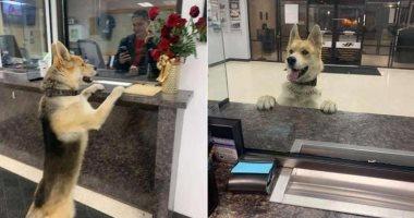 """""""شيكو"""" كلب يلجأ للشرطة بحثا عن منزله.. اعرف التفاصيل"""