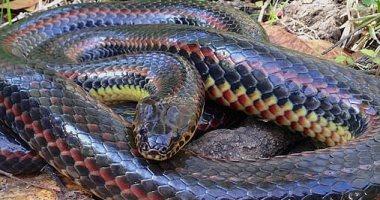 الثعابين تواجه خطر الانقراض بسبب تغير المناخ .. اعرف التفاصيل