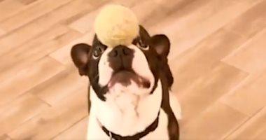 لعشاق تربية الحيوانات الأليفة..أطعمة تمنع إصابة كلبك بالسرطان
