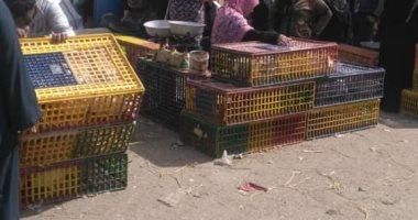 صور .. انتشار ظاهرة ذبح الطيور الحية بسوق الخميس ببلبيس.. ورئيس المدينة يشن حملة