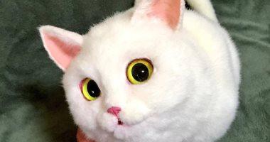 هتفتكرها حقيقية.. يابانية تصمم حقائب يد نسائية على شكل قطط