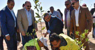 """لزراعة ألف شجرة.. محافظ أسوان يطلق مبادرة """"نجملها"""" لتشجير المدينة (صور وفيديو)"""