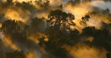 الغابات الاستوائية تفقد قدرتها على امتصاص ثانى أكسيد الكربون