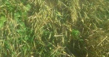 صور .. مياه الأمطار تغرق الأراضى الزراعية بعزبة بمركز دكرنس بالدقهلية