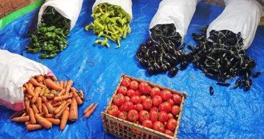 الزراعة: لجان بحقول الخضار الصيفى لزيادة المعروض ومواجهة الموجة الحارة
