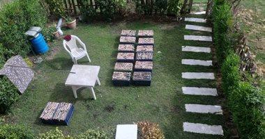 الطب البيطرى يفحص الثعابين المضبوطة داخل شقة الصينيين بالقاهرة الجديدة