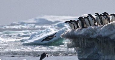 هروب الحيوانات البحرية والطيور تجاه القطبين بسبب تغير المناخ