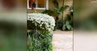 فيديو.. صديق أوبرا وينفرى يخضع للحجر المنزلى بسبب فيروس كورونا