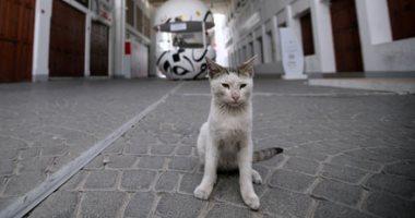 إصابة قط فى هونج كونج بفيروس كورونا