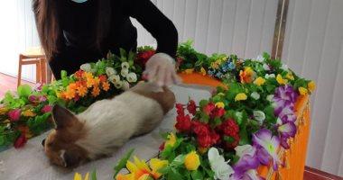 جنازة حارة والميت كلب.. الصين تقيم جنائز لحيوانات أليفة.. فيديو