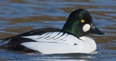 أعداد الطيور البحرية ينخفض الربع بسبب تغير المناخ.. اعرف التفاصيل