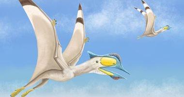 تعرف على طائر التيروصور الذى حلق فى السماء منذ 100 مليون سنة